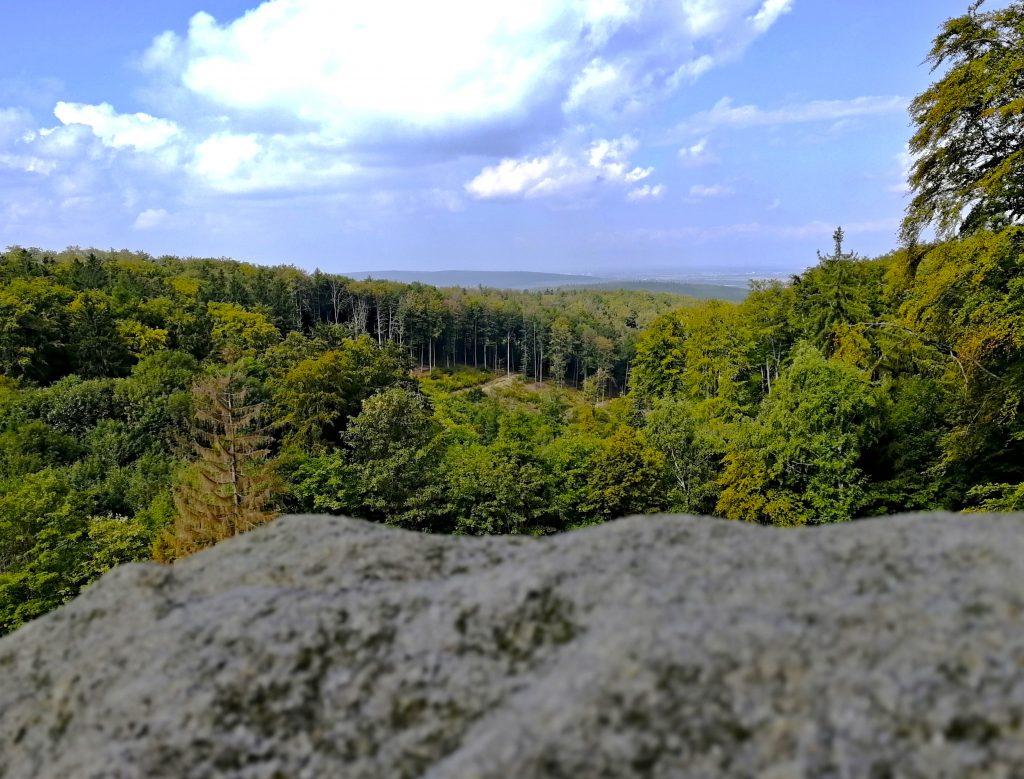 Lesy v okolí lesního penzionu Bunč
